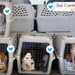 Gửi vận chuyển Chó Mèo đi Canada